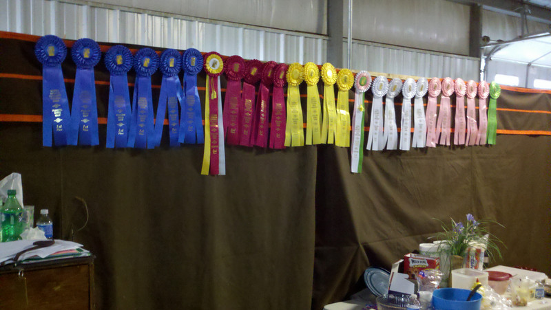 Some of the ribbons from the first day.