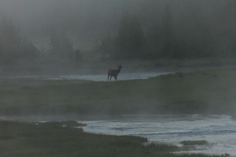 Yellowstone Misc-43.jpg