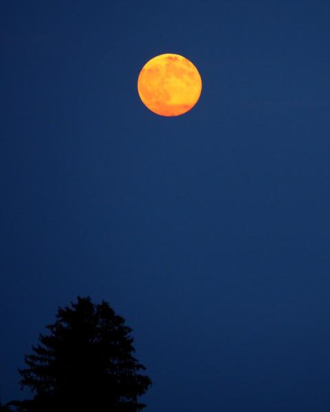 Super Moon 2.jpg