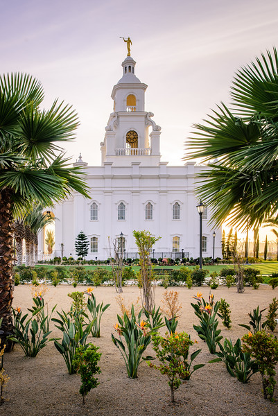 Tijuana Temple - Framed by Palms