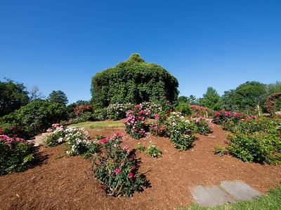 Elizabeth Park Rose Garden_June, 2014