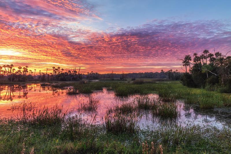 Orlando Wetlands Sunrise