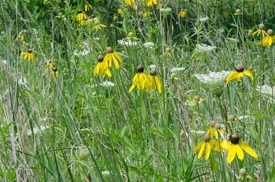 Wild Flowers by Lake Michigan7/28/11