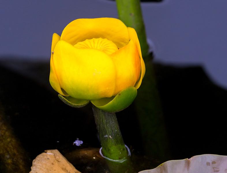 A lovely swamp bloom