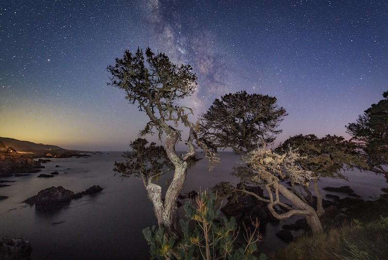 Bluff Trees & Milky Way (Horizontal)