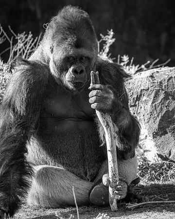 Dallas Zoo Feb. 28, 2020
