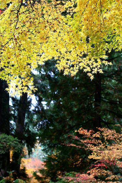 Portland Japanese Garden  11-11-11  3510.jpg