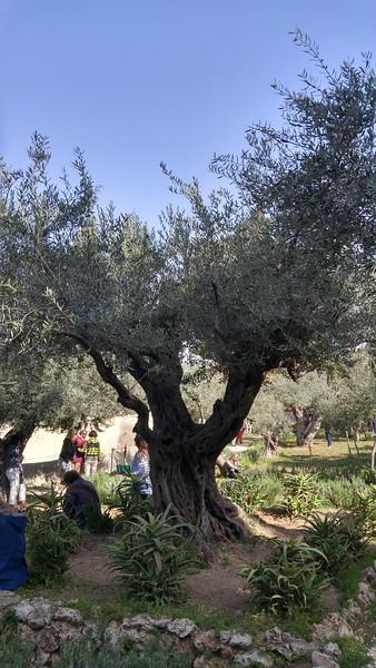 9-garden-of-gethsemane