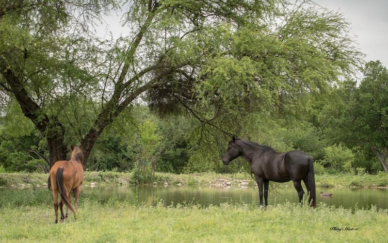 Horses x 2 TR_DWL0915.jpg