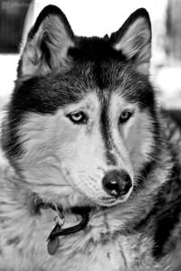0003-Sierra Dog-Edit