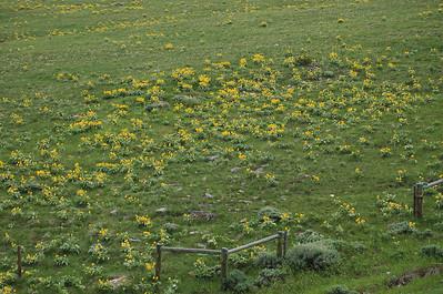 Yellowstone NP 2011 omgeving
