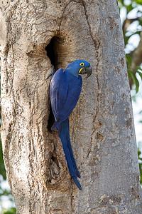 Pantanal, Brazil - Aug 2014