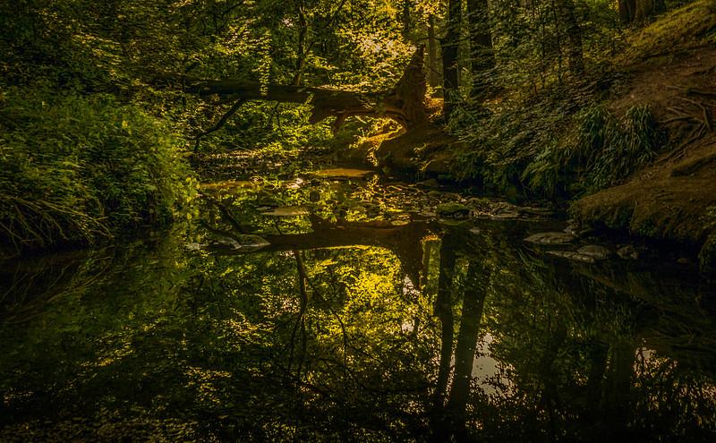 Forest Shadows-167.jpg