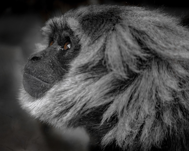 Moloch Gibbons