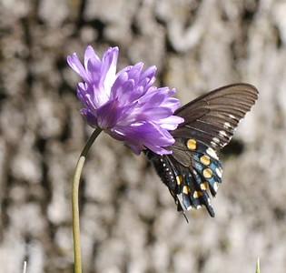 Shell Ridge Wildflowers - upper and lower Buck trails - 4/16/2015