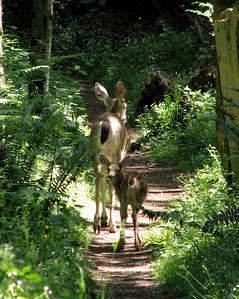 Cougar Mountain Regional Wildland Park 06-02-07