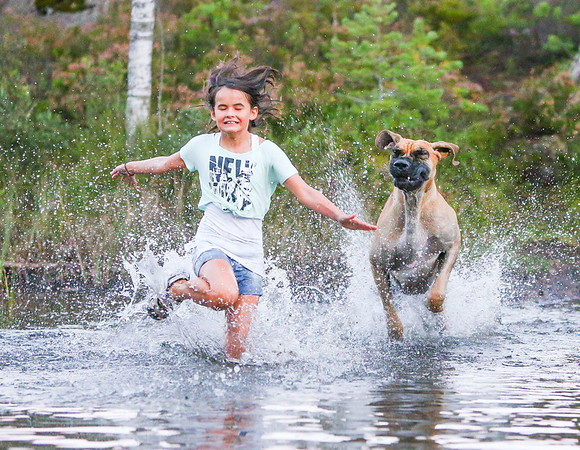 Dog Photographer of the Year 2013