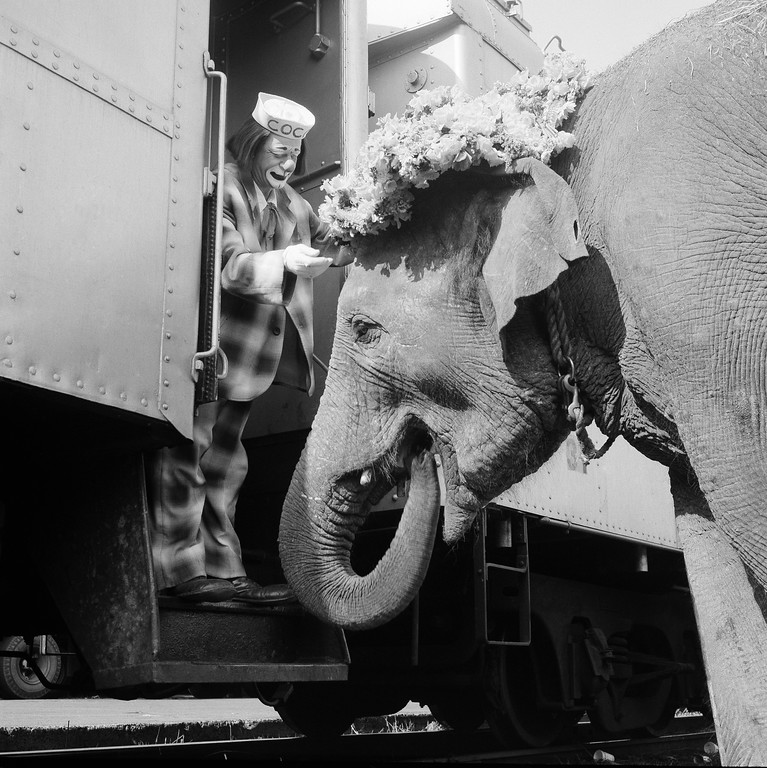 . Coco the Clown places a floral Easter bonnet on Targa�s head in preparation for a freight yard preview and parade in New York on April 5, 1966 as the circus unloaded in the Bronx yards of the New Haven railroad. Targa, 14-year-old elephant, was said to be the largest of the animals unloaded from trains for the march downtown to Madison Square Garden for opening night show later in the day. (AP Photo)