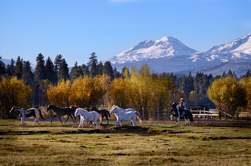 _DSC9856e3 KateThomasKeown_cowgirl bringing the herd in 10x16.jpg