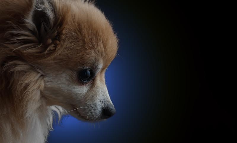 bluedog.jpg