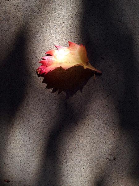 Leaf 2242.jpeg