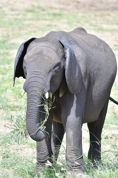 Elephants114.jpg