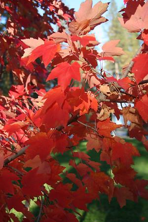 fall foliage 2009