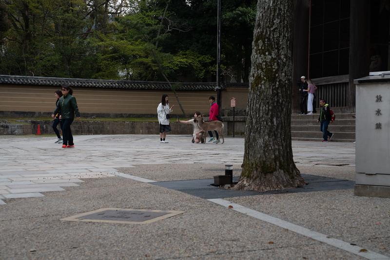 20190411-JapanTour-5034.jpg