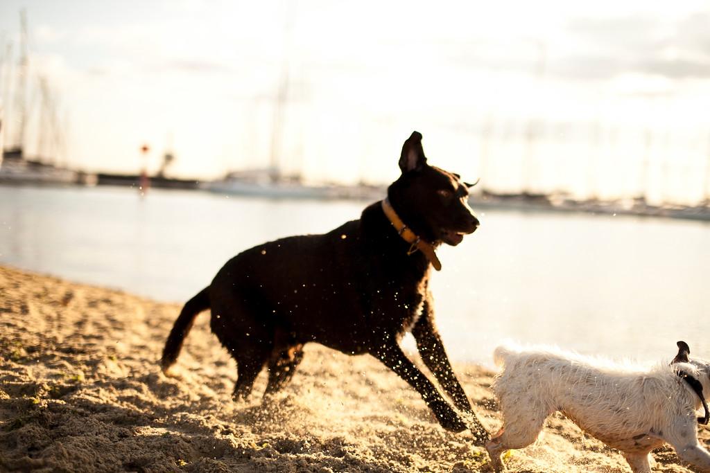 Dogsonbeach-AlexanderGardner-0023-20100614