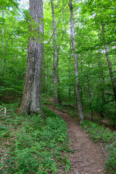 Bridges Camp Gap Trail -- 4,320'