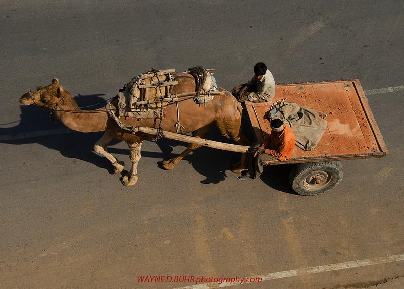 INDIA2010-0206A-133A.jpg