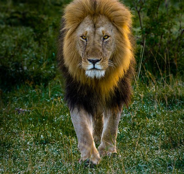 Lions-0123.jpg