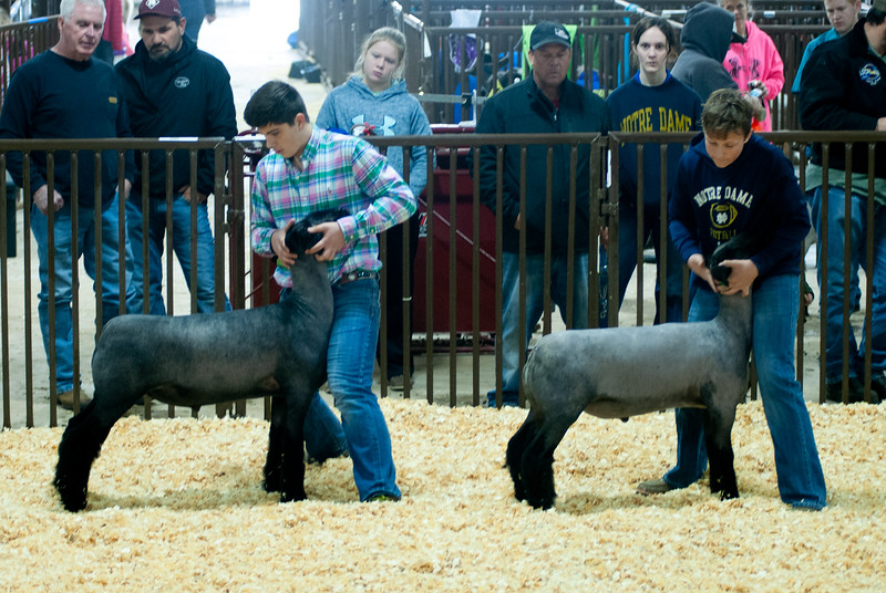 kay_county_showdown_sheep_20191207-67.jpg