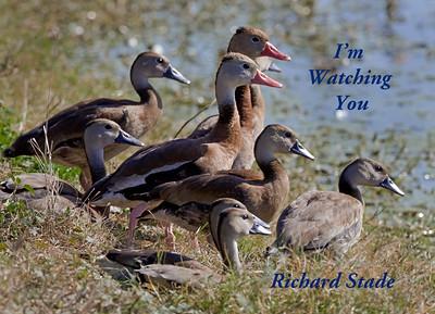 <em>I'm Watching You</em>