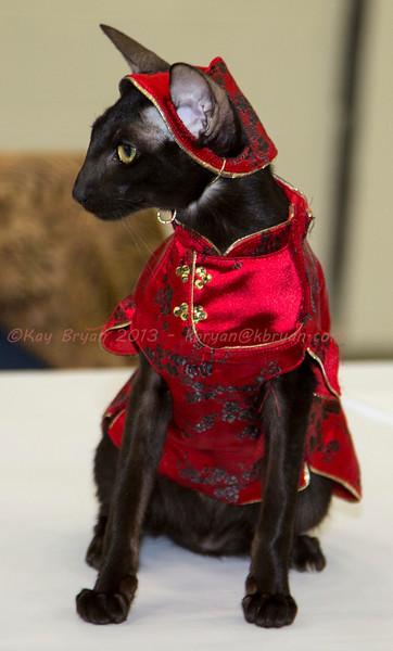 CatShow2014063.JPG