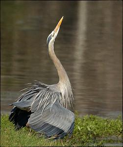 Sweetwater Wetlands & Paynes Prairie, Florida