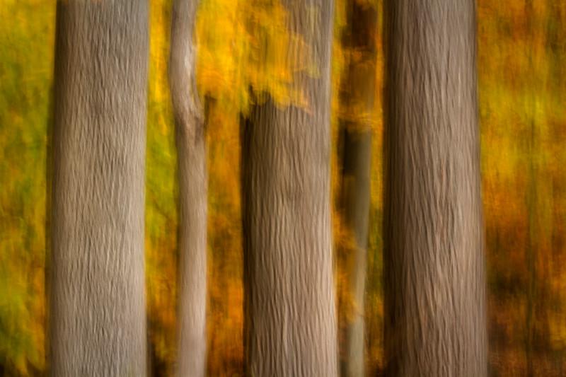 Woods of Scherman Hoffman