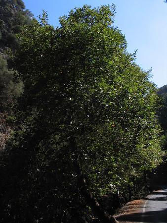 Crete Sep 4, 2006