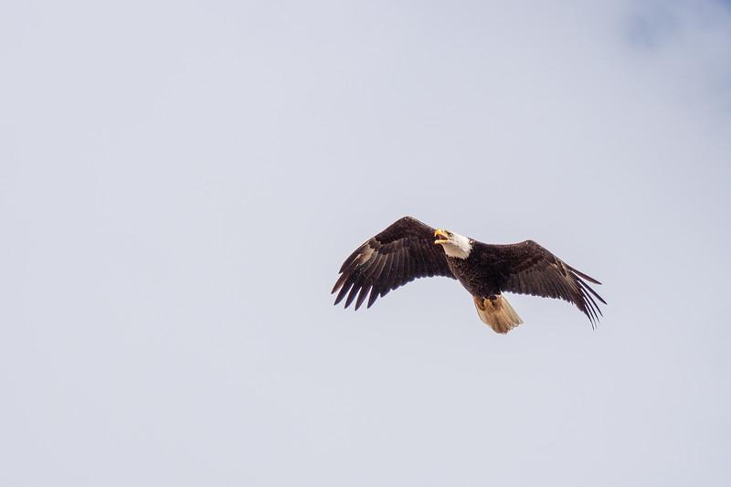Eagle Bird-7.JPG