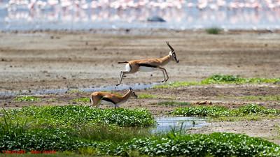 Wildlife - Africa