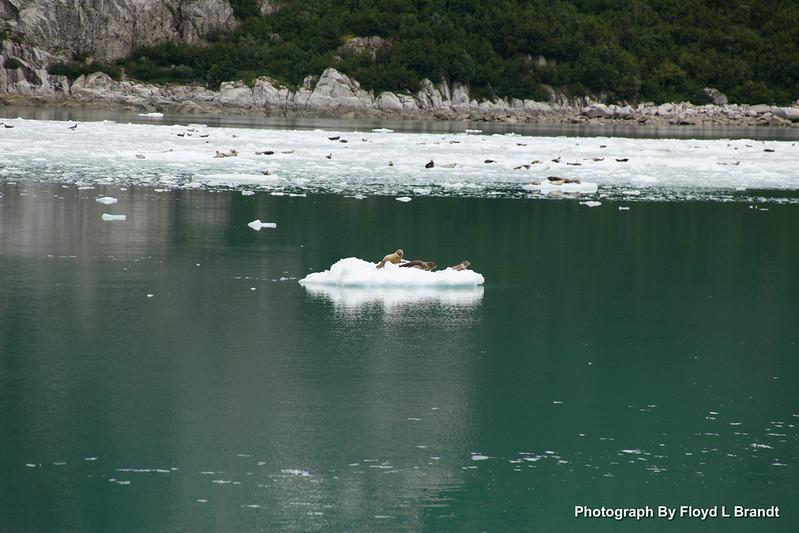 Alaska Kenai Fjords0072.JPG