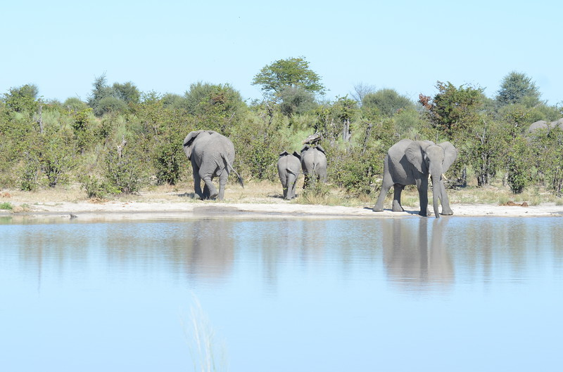 87 - Elephants at the waterhole - Chitabe - Anne Davi