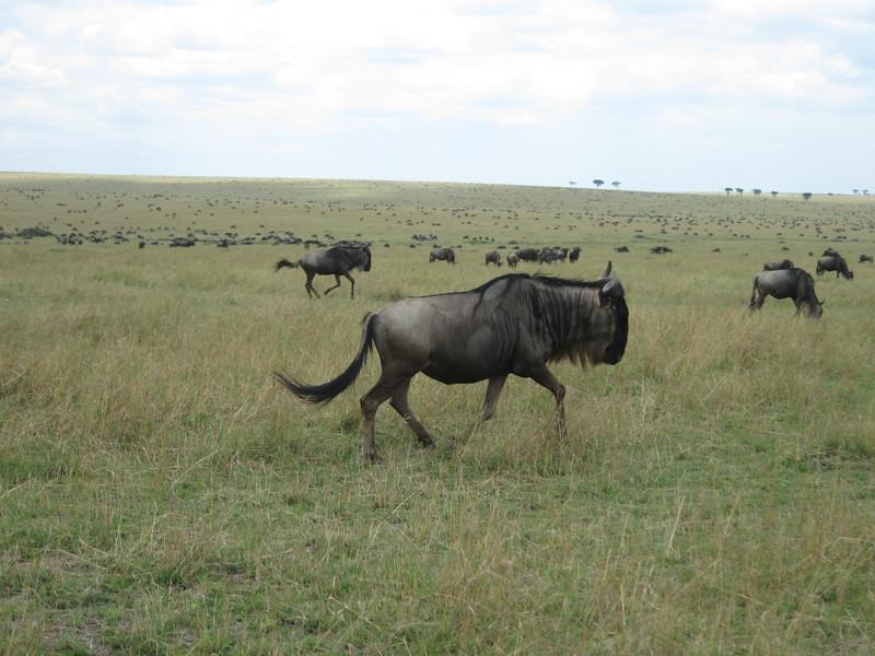 Tanzania14-3947.jpg