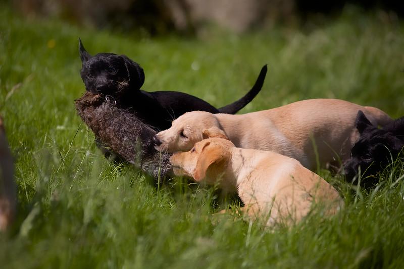 Puppies 804.jpg