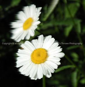 023-blur_effect_daisy-warren_co-24may06-0330