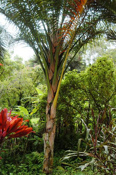 146- 20080410- Hawaii 15- Enroute to Hilo- Hawaii Tropical Botanical Gardens DSC_2668.jpg