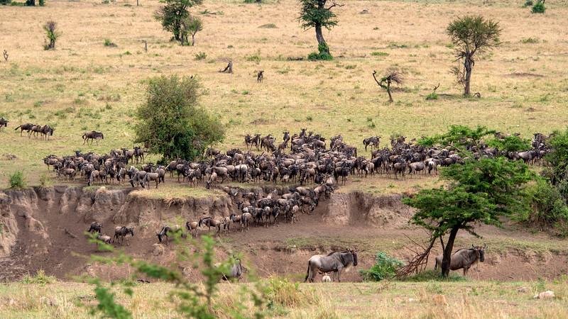 Tanzania-Serengeti-National-Park-Safari-Great-Migration-Wildebeest-03.jpg