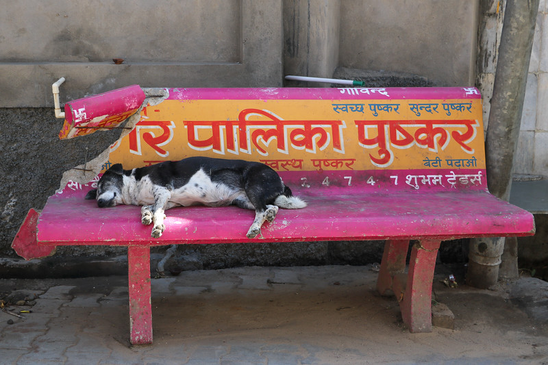 India-Pushkar-2019-9989.jpg