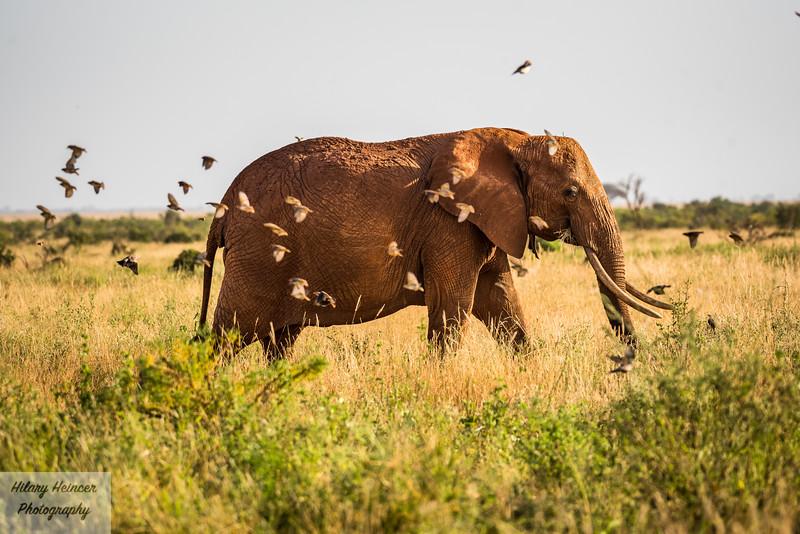 Kenya Wildlife-42.jpg