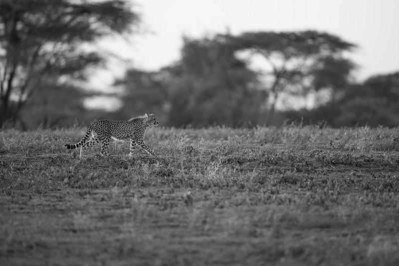 Tanzania_Feb_2018-126.jpg